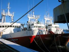 la flotta Panapesca